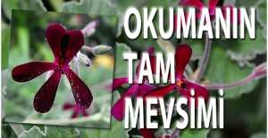 GRİBİN TEDAVİSİ